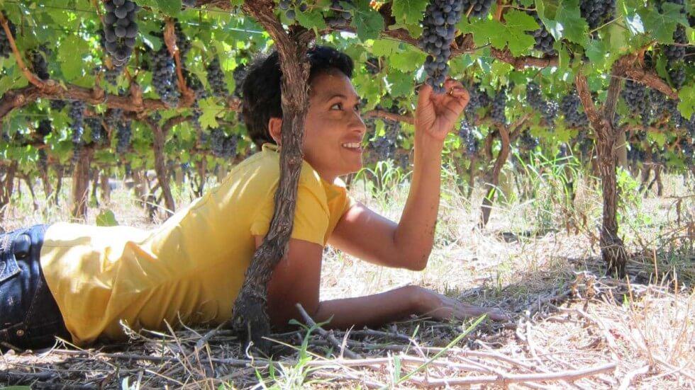 Amani Vineyards