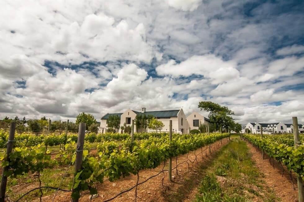 Croydon Vineyards